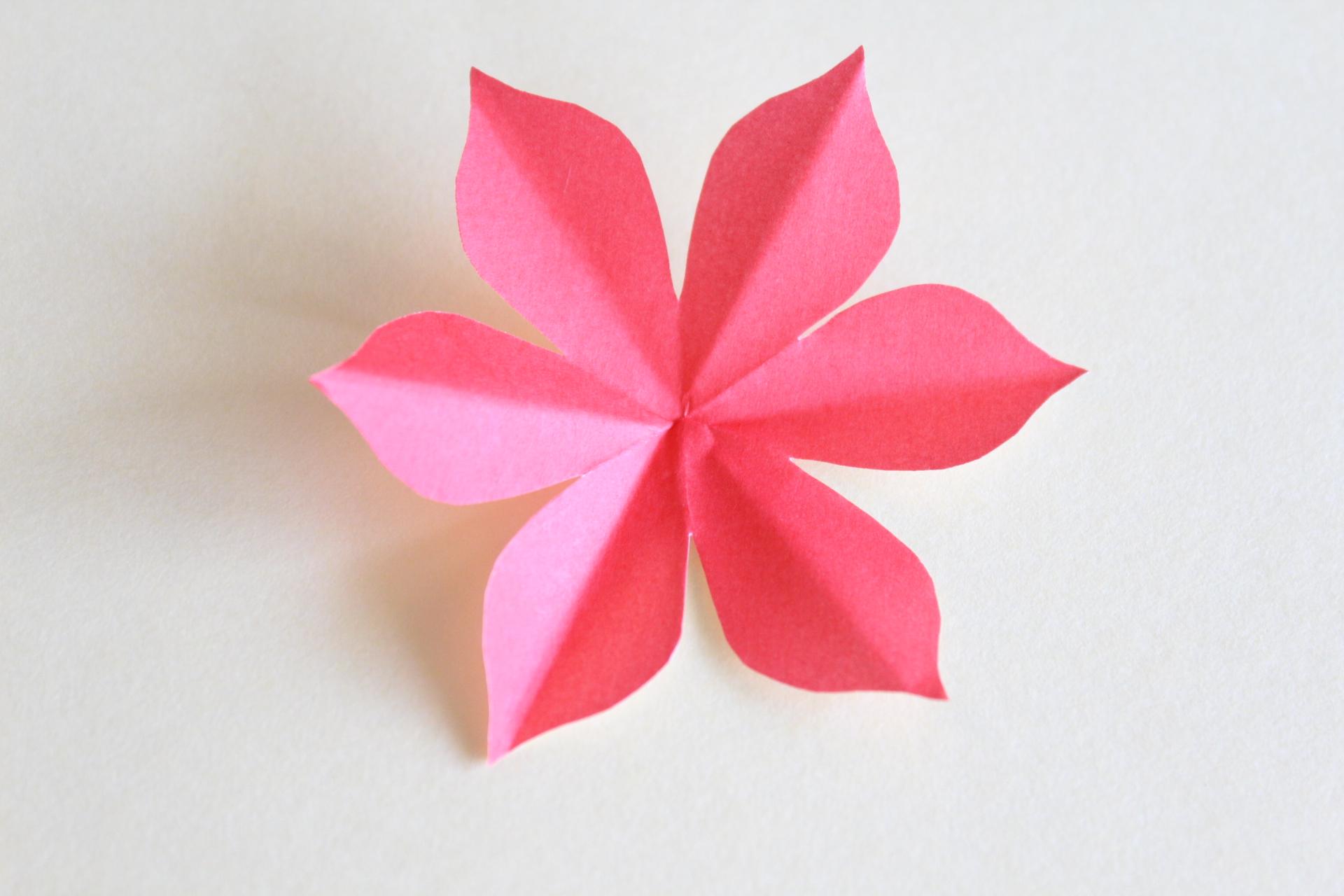 ポインセチアの花びら